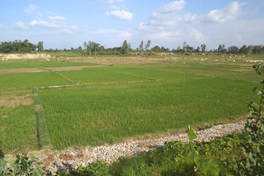 Irrigation sector